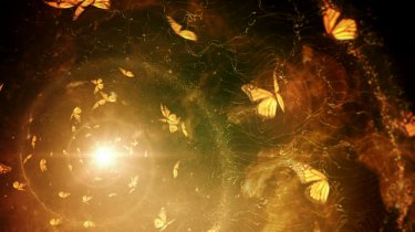 golden-butterflies